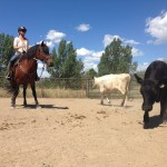 Pandora at Cow Clinic 1