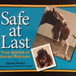 Safe at Last Book