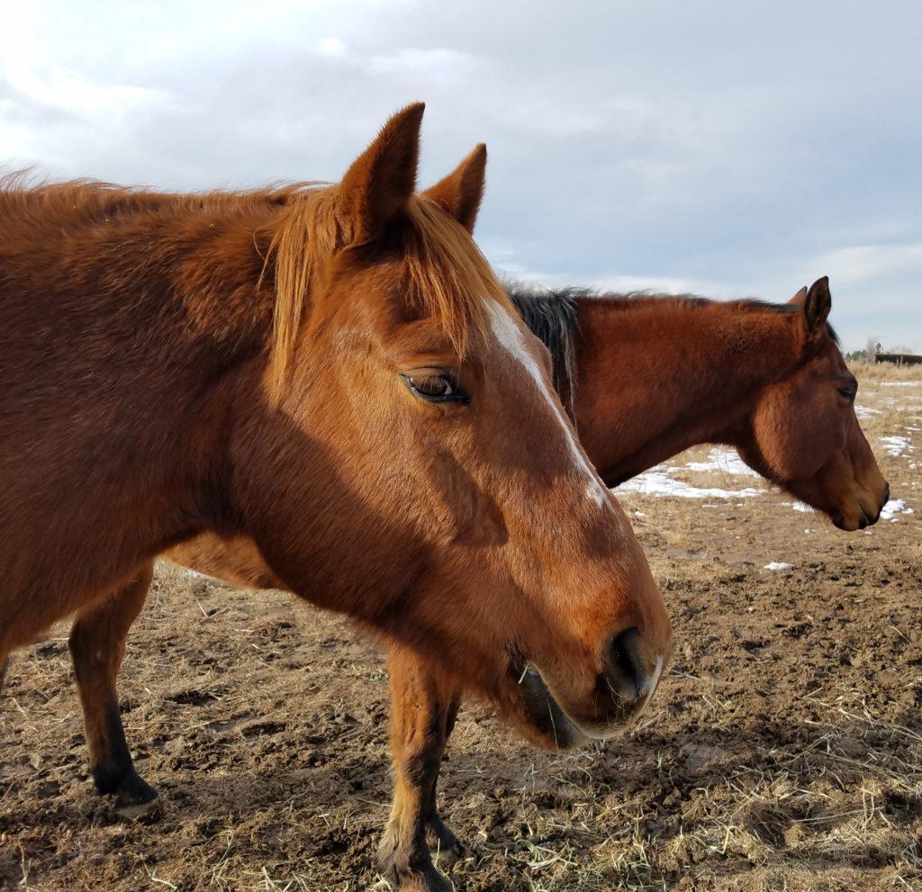 NEWS – Colorado Horse Rescue